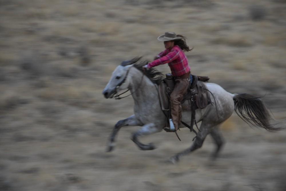 Tolle Pferdetrainer Lebenslauf Probe Zeitgenössisch - Beispiel ...