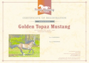 thumbnail of Golden_Topaz_Mustang_C1