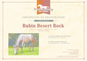 thumbnail of Rubin_Desert_Rock_C1