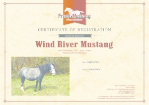 thumbnail of Wind_River_Mustang_C1